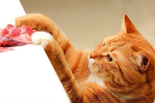 Кішки часто хворіють на сальмонельоз при поїданні сирого м`яса