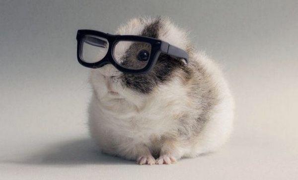 Хом`як в окулярах