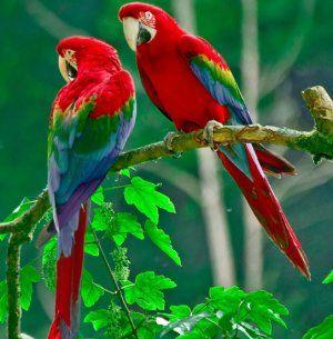 10 Zaujímavé fakty o papagájoch