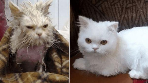 Преобразившийся вуличний кіт