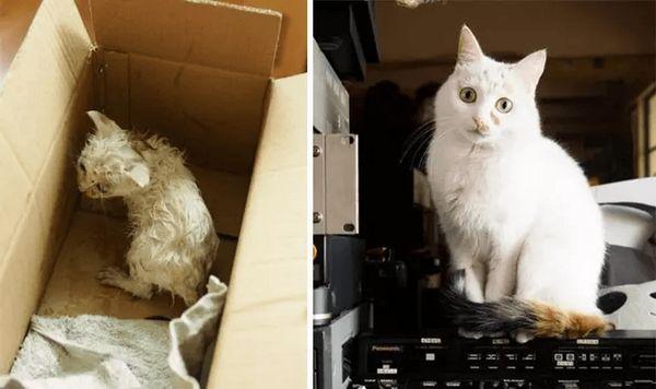 Білий кіт
