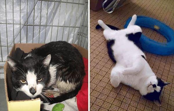 Кот знайшов нових господарів