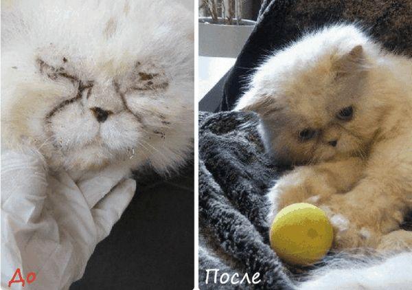 Хворий кіт, який знайшов будинок