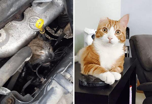 Кот, врятований з автомобіля