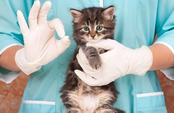 Встановити алергію у кошеняти може тільки фахівець