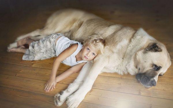 10 Najlepších plemien psov pre domácnosť a rodiny s deťmi