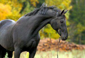 10 Кращих російських порід коней
