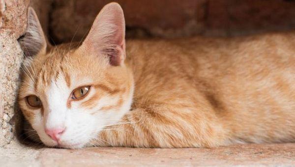 Top 10 dôvodov, prečo vaša mačka chudne