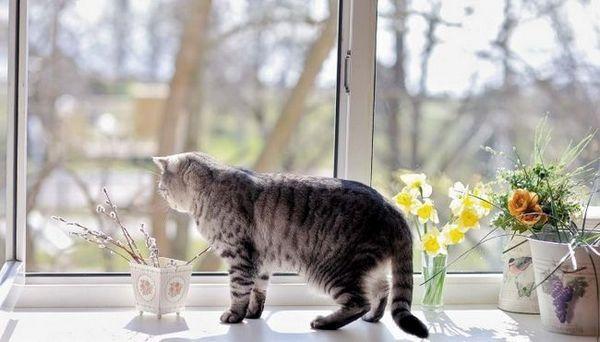 10 Dôvodov, prečo mačky milujú sedieť pri okne