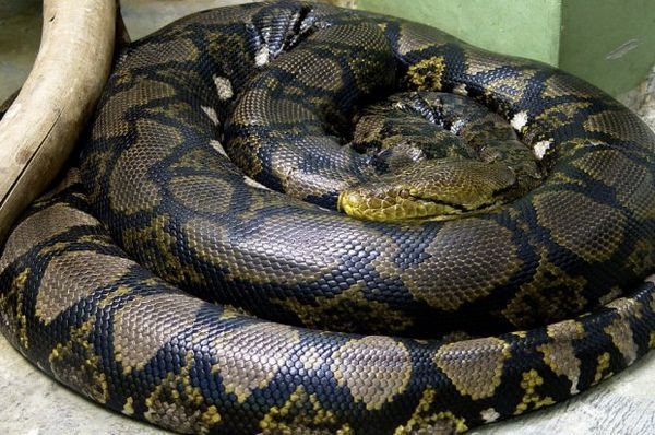 Python sieťovaný