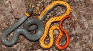 Найкрасивіші змії в світі