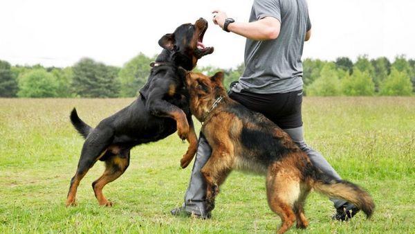 Найнебезпечніші породи собак