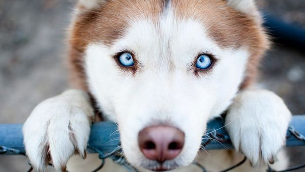 10 Z najchytrejších a najvernejších plemien psov na svete