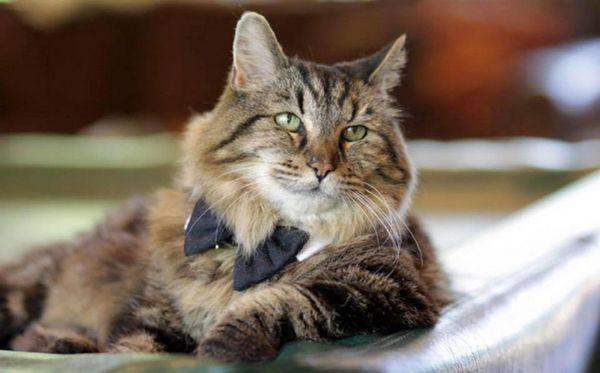 10 Najchytrejších plemien mačiek na svete