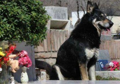 10 Dojímavých príbehov o verných psoch