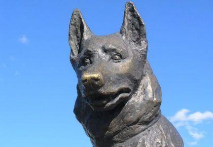 найвірніші собаки світу