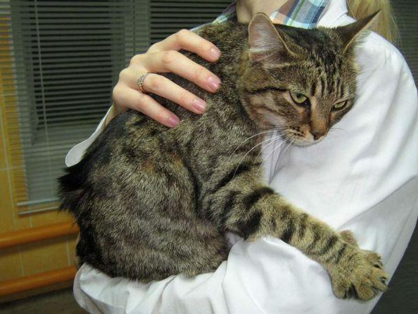 Вірусні захворювання кішок
