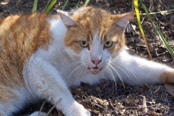 Сказ у кішок - невиліковна хвороба