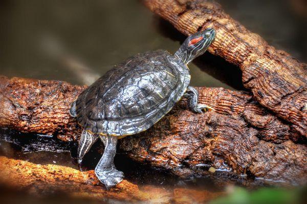 Профілактика ринітів і нежиті досить проста: необхідно оберігати черепаху від протягів