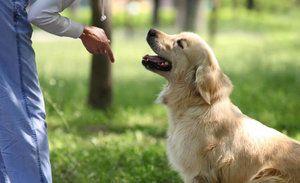 11 Tímov všeobecného výcvikového kurzu pre psov: ako naučiť psa poslušnosti