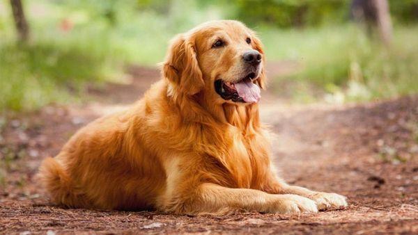 12 кращих мисливських порід собак