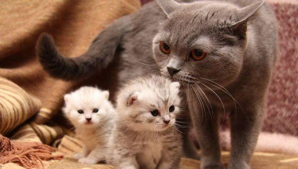 Засоби проти бліх для котів стануть першим і надійним помічником в боротьбі з паразитами