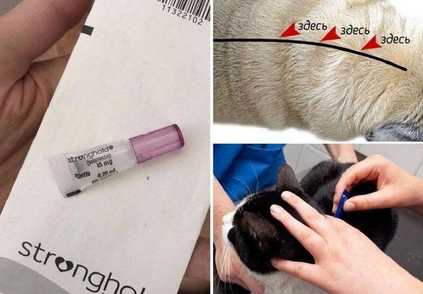 12 кращих засобів від бліх для котів