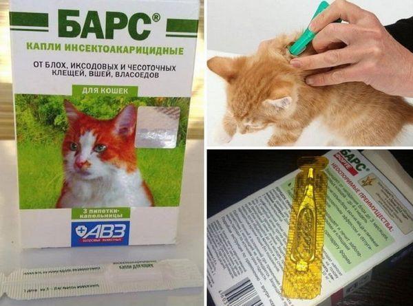 Краплі барс для кішок