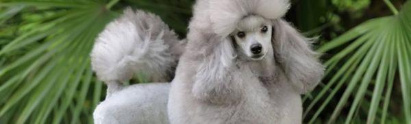 12 Plemien psov, ktoré sa nezhodia ani nepáchnu