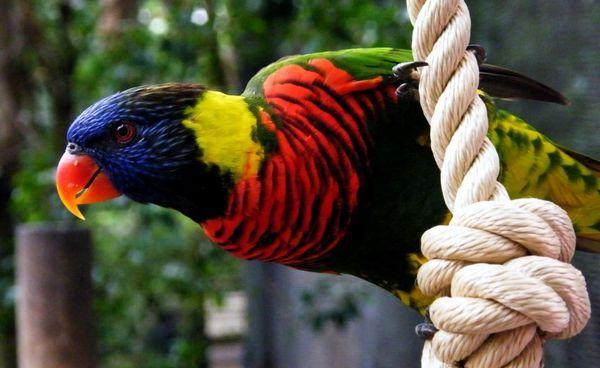 12 Najkrajších a najvzácnejších papagájov na svete