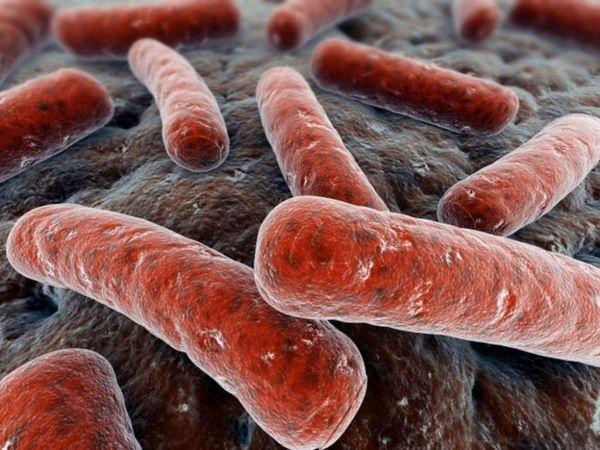 12 najnebezpečnejších chorôb andulky