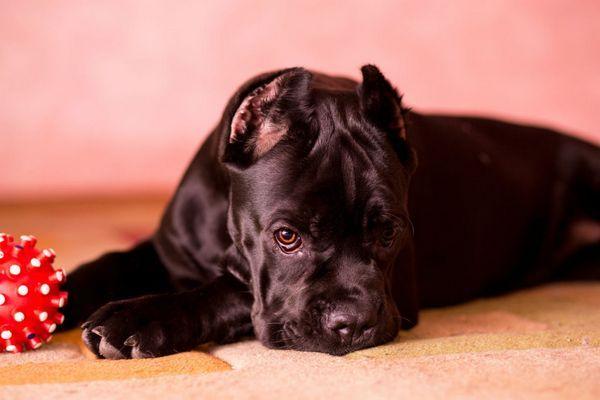 12 найпоширеніших хвороб собак, їх ознаки і лікування