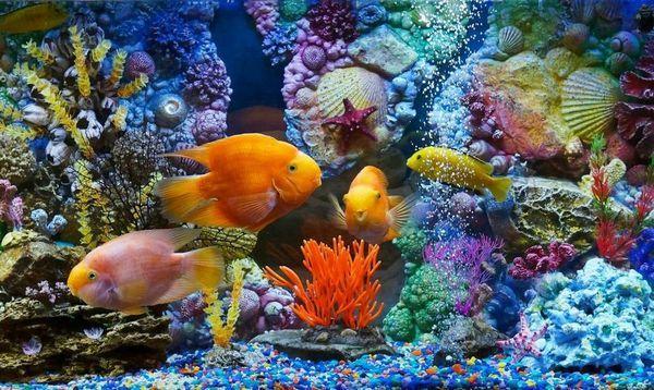 Кращі акваріумні рибки