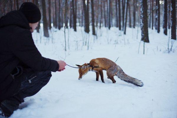 Вигулювати тварину потрібно тільки на шлейки