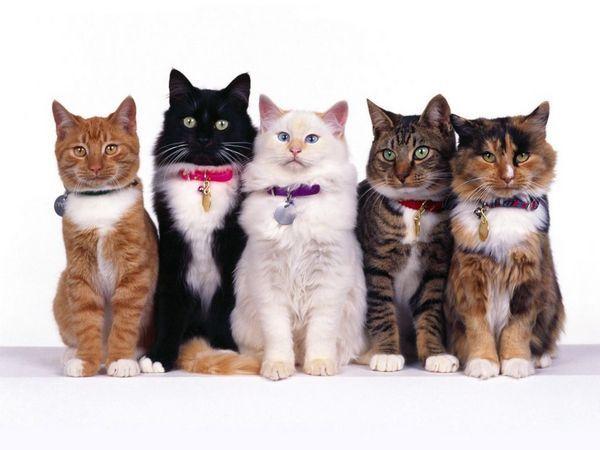 Кішки різних порід