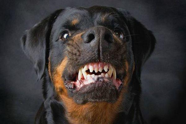 3 Причини, чому собаки не люблять п`яних