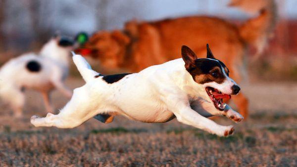 3 dôvody, prečo váš pes slintá, príznaky a liečba