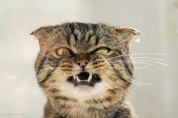 3 Vaše zvyky, ktoré vaša mačka neznáša