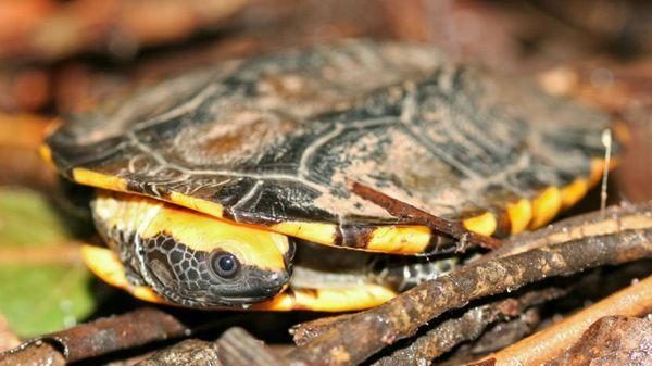 3 druhy populárnych domácich korytnačiek - suchozemské, vodné a mini korytnačky