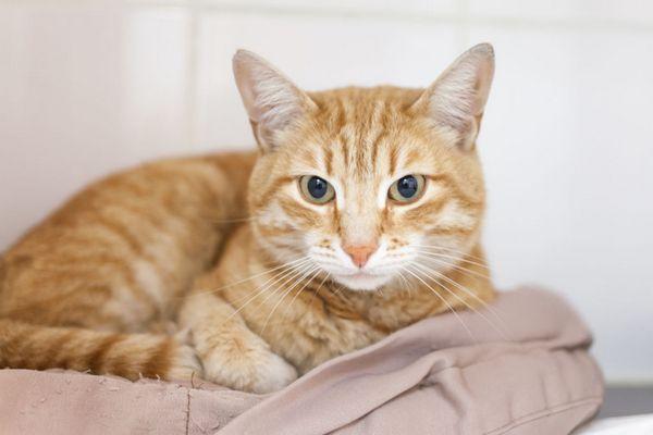 3 види вірусного ентериту у кішок, симптоми і методи лікування