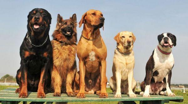 Найпопулярніші породи собак в світі