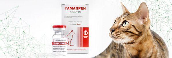 Gamapren - pre mačky s priamym antivírusovým účinkom