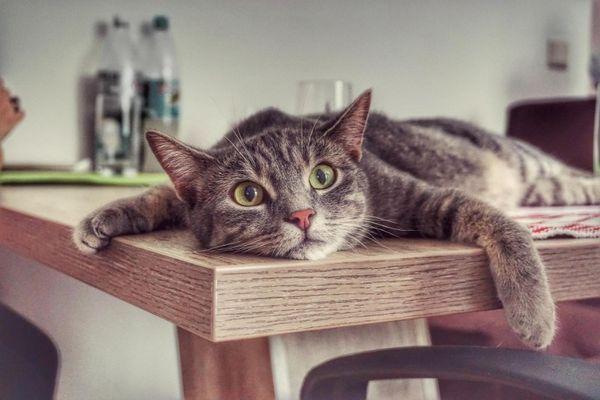 4 Mačacie návyky, s ktorými budete musieť žiť