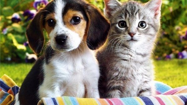 4 Duševné poruchy u zvierat podobné zvieratám