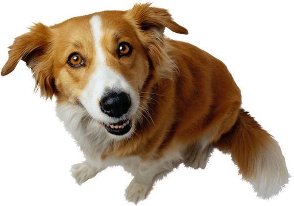 4 найпоширеніші види позбавляючи у собак, як розпізнати і чим мазати