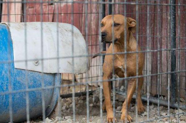 Собаки містилися в поганих умовах