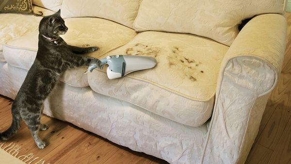 5 Trikov, ako sa zbaviť mačacích chlpov doma