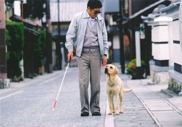 5 Najlepších plemien vodiacich psov pre nevidiacich