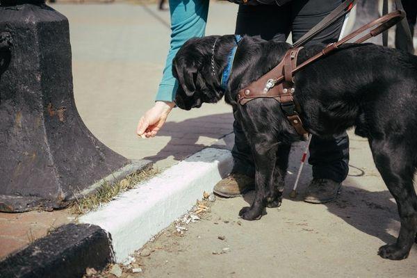 Загальна підготовка триває протягом першого року життя собаки
