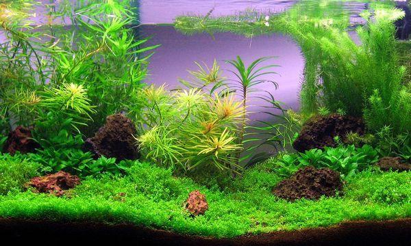 Добрива для акваріумних рослин своїми руками
